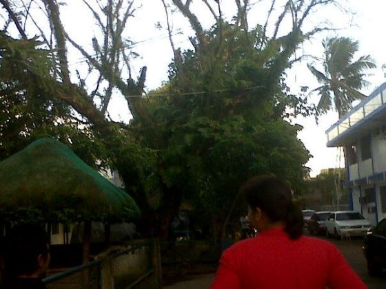 Way back to RCLO 5, the trees are also teeming with different kinds of plants, mostly ferns and vines.